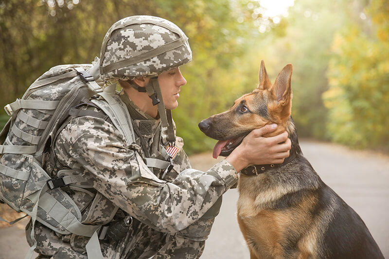 What is a Tactical Dog Harness?